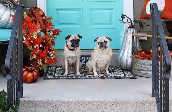 Front door dogs